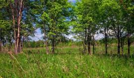 stockvault-forest141211